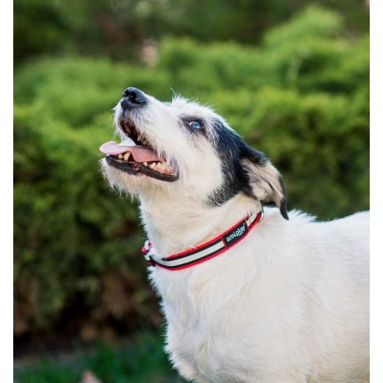 Regulējama kaklasiksna suņiem Amiplay Shine Red size M