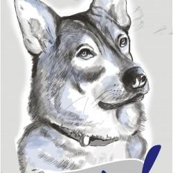 Maks pilnvertīga suņu barība 20kg